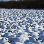 冬のヤチボウズがすっきり