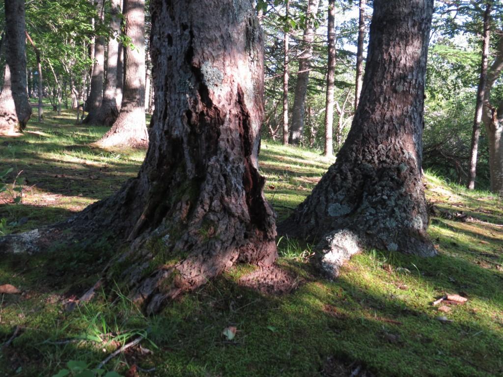 樹木の劣化とキノコの関係は?