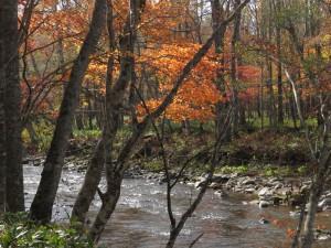 川辺には盛りの紅葉