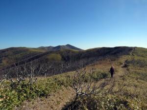 西別岳を正面にみて、きれいに草刈がされた登山道