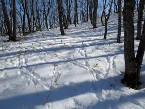雪原は生物たちの足跡がびっしり