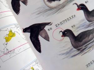 黄色が越冬地、緑色は周年生息地。(『鳥630図鑑』日本鳥類保護連盟刊より)