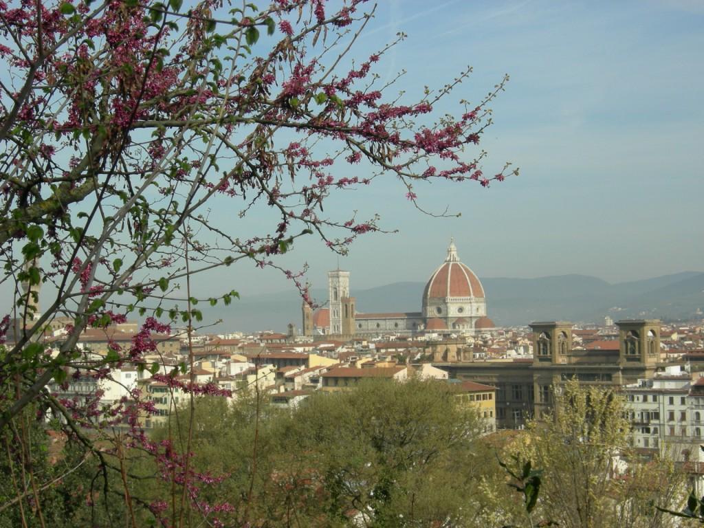 フィレンツェのミケランジェロ広場に咲くユダの木。花言葉は「裏切り」。なるほど。綺麗にピンクの花を咲かせてます。