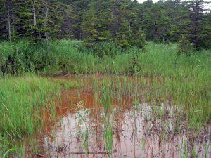 オンネトー周辺にある湿地帯です