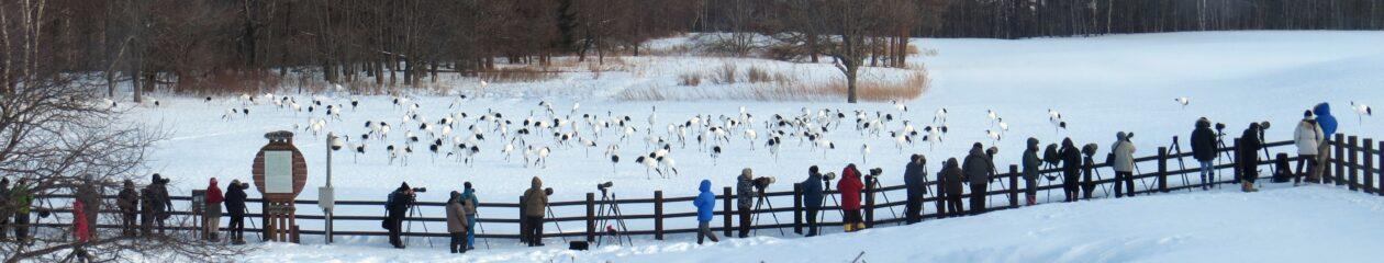 釧路湿原&阿寒の自然ガイド《クスリ凸凹旅行舎》へようこそ