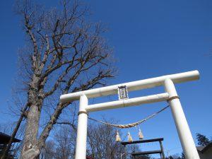 ご神木は3百年のミズナラ。川湯温泉神社は温泉街にひっそりと。