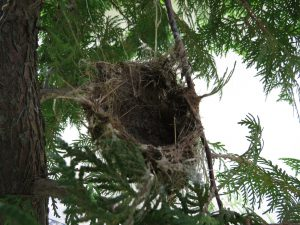 巣は直径7センチ、深さ5センチでとても小さいけど暖かそうです