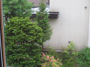 真ん中のヒバの木が営巣木です