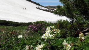 残雪豊かな雪原をトラバースしているのはドイツと英国から来た若い女性ハイカーでした