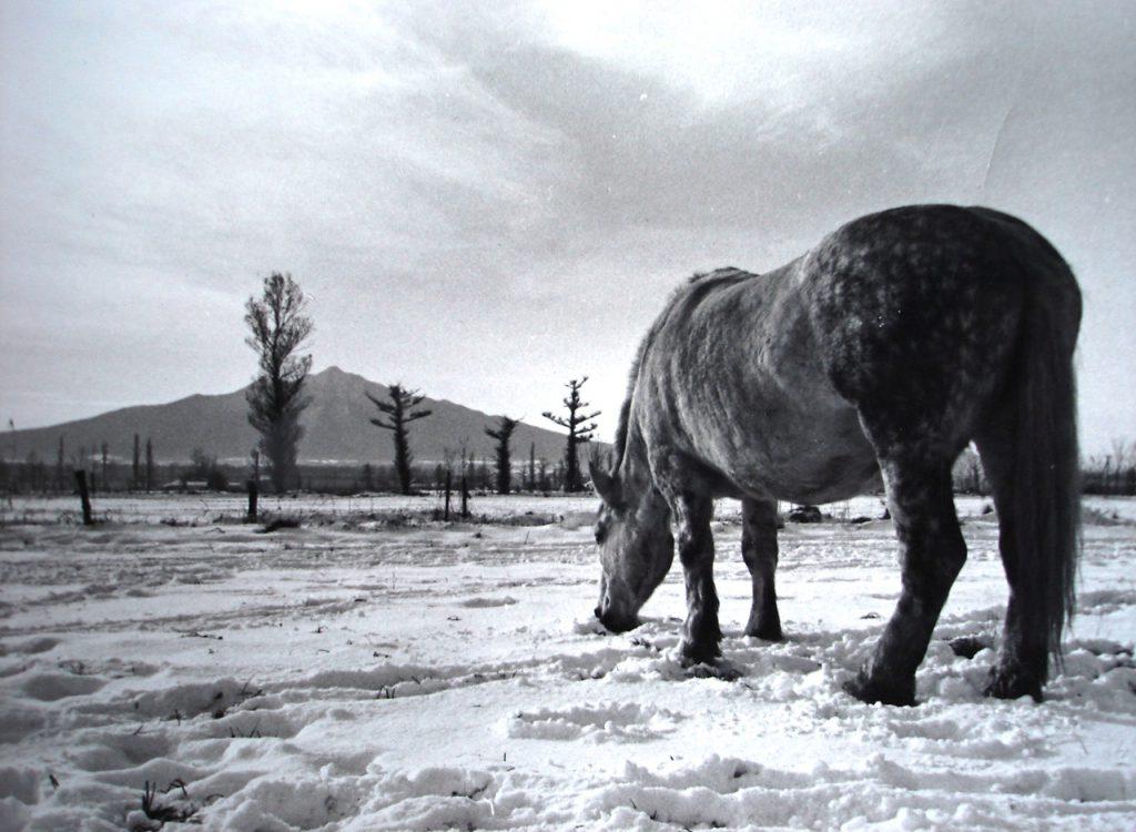 モノクロ写真を複写。以久科の実家からいつも見ていた斜里岳