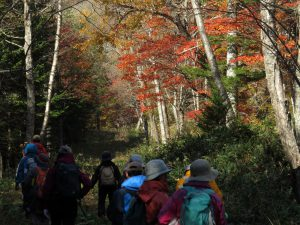 紅葉のなかをルンルン気分で散策します