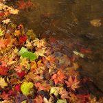 随所に小川があり、水面に紅葉が彩りをそえます