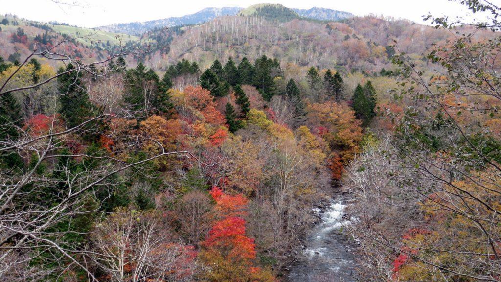 紅葉と阿寒川、そして針葉樹と山並み。これが「川の道」だ!
