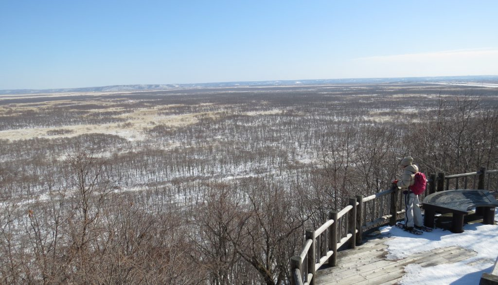 サテライト展望台からの冬の釧路湿原全貌